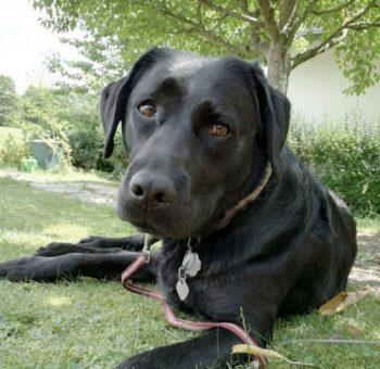 Therapiehund, Erziehungsberatung, Heilpädagogik, Elternberatung